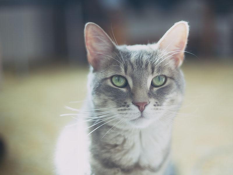 avery-elise-xavier-pet-cat-cutie-face
