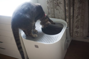 cat-using-modkat-top-entry-litter-box-review-kittyclysm-blog