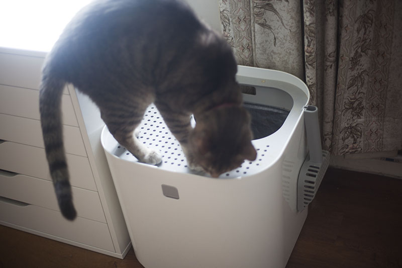 top-entry-cat-litter-box-use-modkat-review-kittyclysm