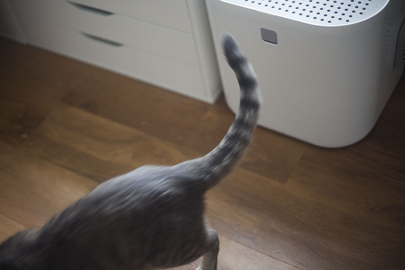 testing-cat-litter-box-modko-modkat-review-kitty-blog