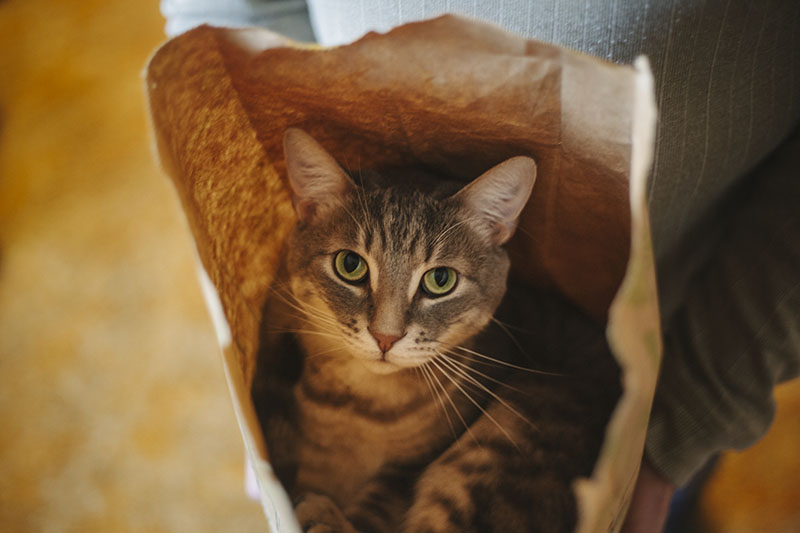 cute-cat-staring-sitting-paper-bag