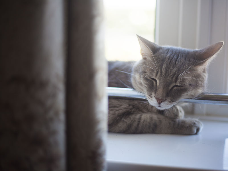 15 Reasons I Absolutely Adore My Cat