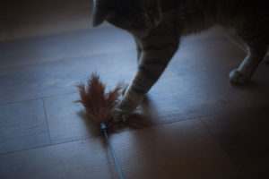 interpet-pet-love-kat-tikkler-review-kittyclysm-cat-toys