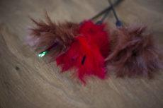 Interpet Pet Love Kat Tikkler Feather Wand Cat Toy Review