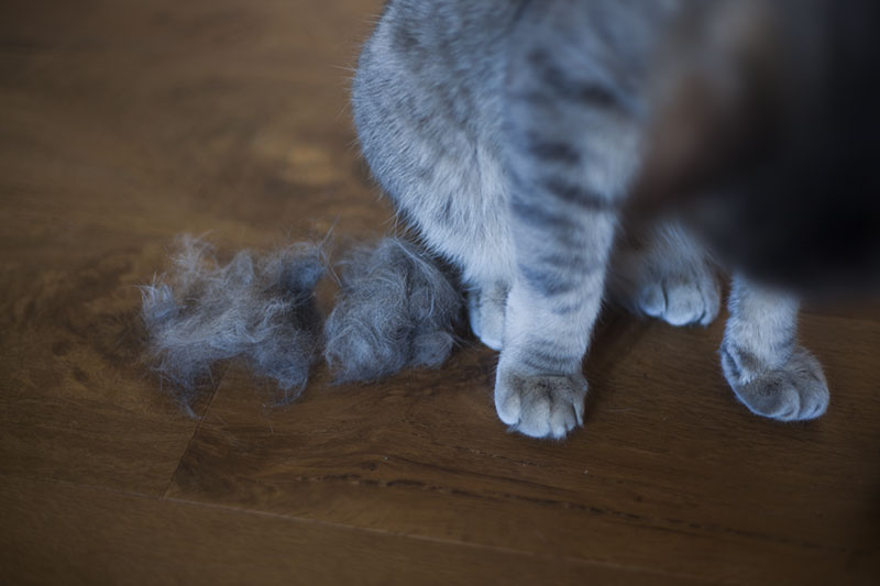 cat-deshedding-brush-grooming-pet-kittyclysm