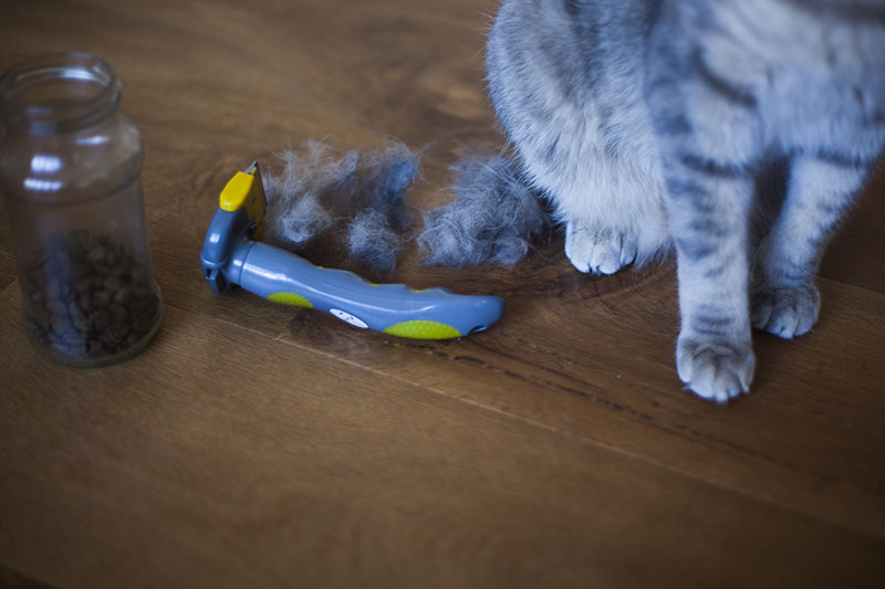 tools-of-the-trade-grooming-cat-with-deshedding-tool