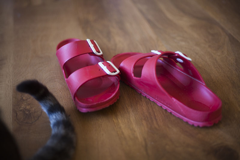 keeping-sandals-around-when-brushing-cat-helpful-tips