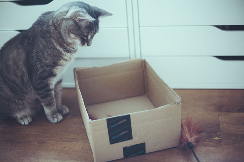 how-to-encourage-a-cat-to-play-tips-and-tricks-kitty-playtime