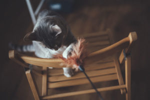 17 Techniques You Can Try to Encourage Your Cat to Play with You