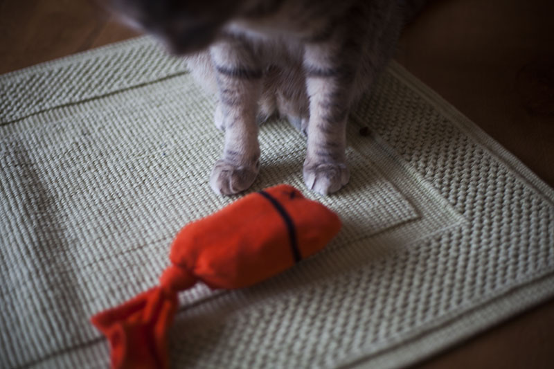 kittyclysm-diy-cat-toy-home-made-sock-puppet-fish