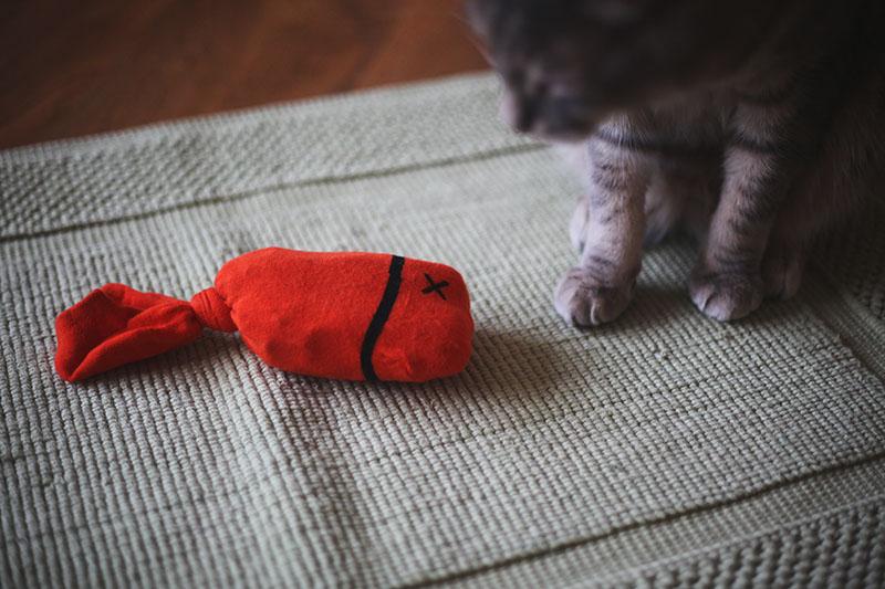 easy-simple-cute-homemade-cat-toy-diy-sock-fish
