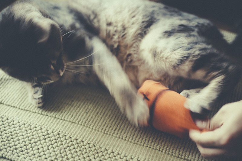 simple-easy-homemade-cat-toy-diy-sock-fish-adorable