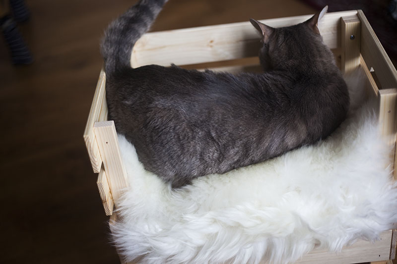 ikea-knagglig-box-hack-cat-bed-diy-kittyclysm