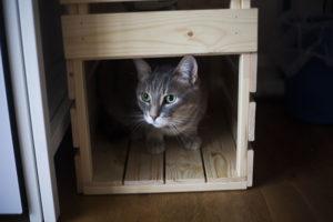 kittyclysm-cat-bed-hiding-spot-ikea-hack-for-cats