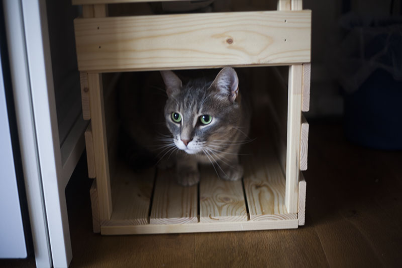 kittyclysm-cat-bed-hiding-spot-ikea-hack-for-cats