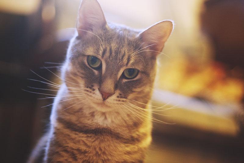 best-cat-in-the-world-kitties-not-evil