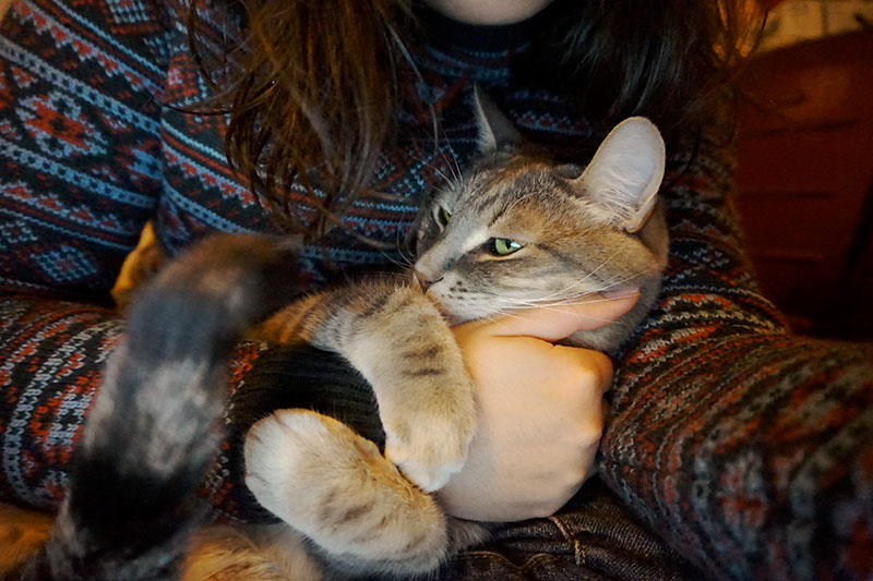 cat-snuggling-best-kitty-in-the-world-pet-love