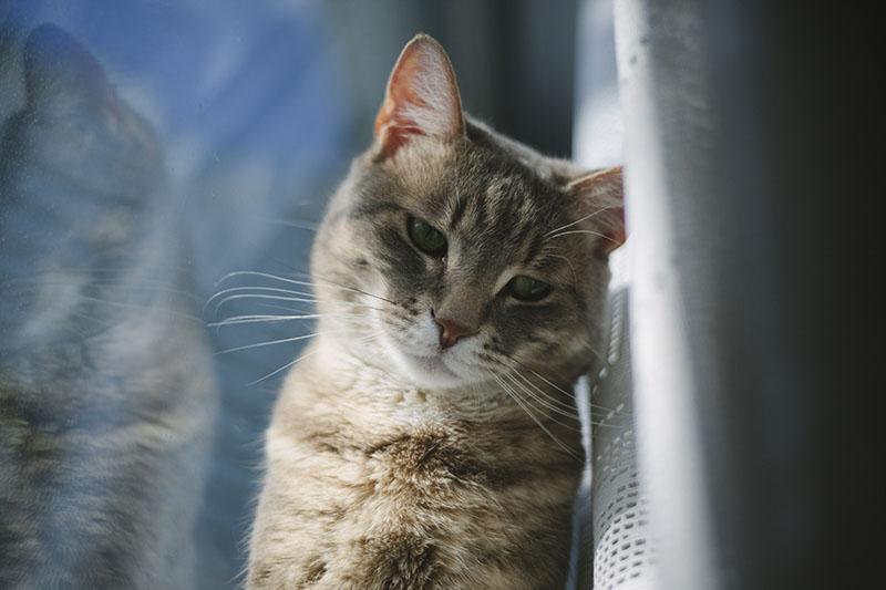 cat-model-beautiful-gorgeous-feline-best-kitty