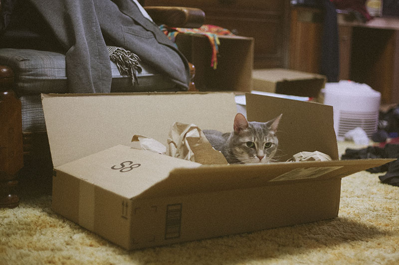 cat-loves-box-cute-kitty-pictures-best-pet