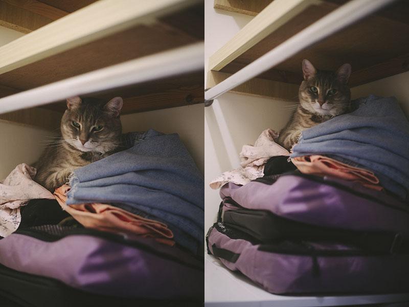 adorable-pet-cat-best-kitty-love