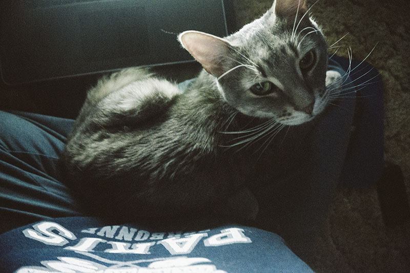 reunited-with-cute-kitty-best-pet-in-the-world
