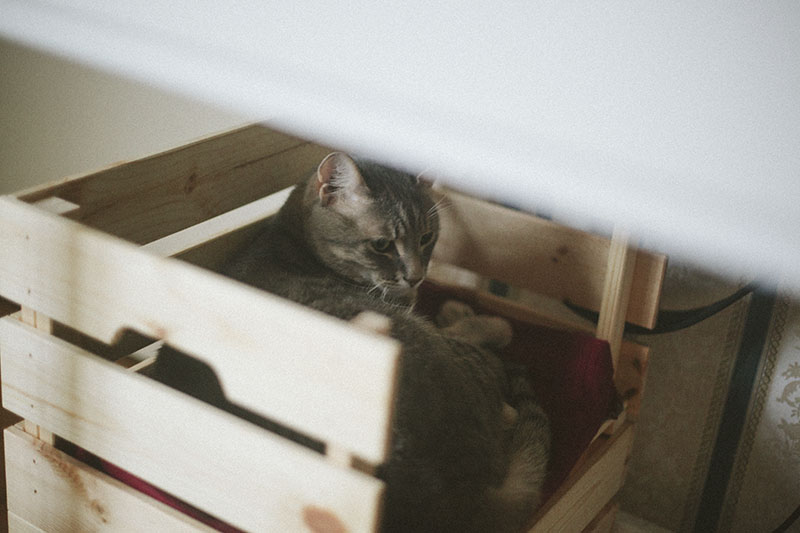 ikea-cat-bed-diy-kitty-sleeping-elevated-nap.jpg