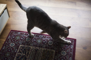 Scratching Post Alternatives: 6 Everyday Items That Keep Kitties Clawing
