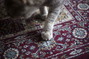 kitties-scratch-carpets-rugs-cat-scratching-post-alternative-everyday-items