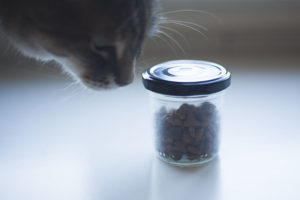 Feeding Your Cat More Than Once a Day? A Trick to Prevent Overfeeding