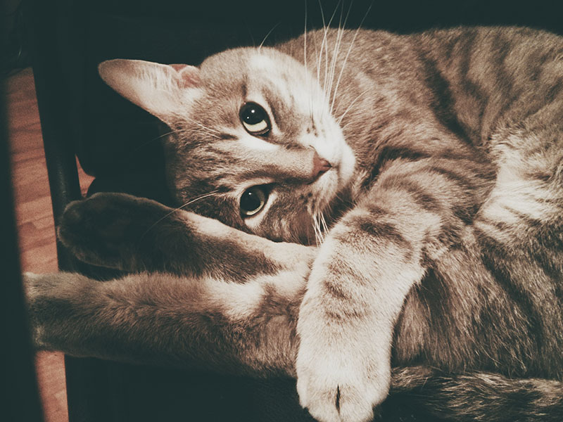 What Makes Cats So Cute?
