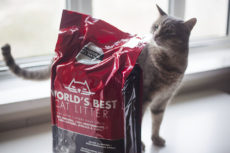 World's Best Cat Litter Whole-Kernel Corn Kitty Litter Review