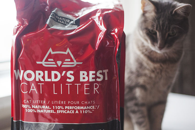 kittyclysm-cat-blog-review-worlds-best-litter-clumping-formula