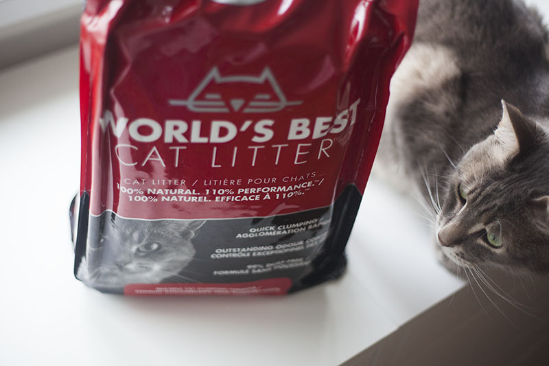 kitty-litter-worlds-best-review-cat-blog-kittyclysm