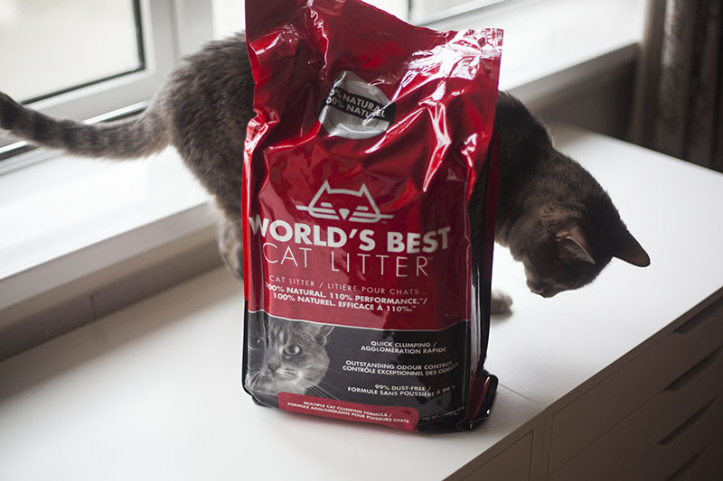 worlds-best-cat-litter-review-kittyclysm-whole-kennel-corn