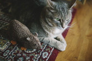 15 Cute Catnip Toys I'd Love Even More Than My Cat Would