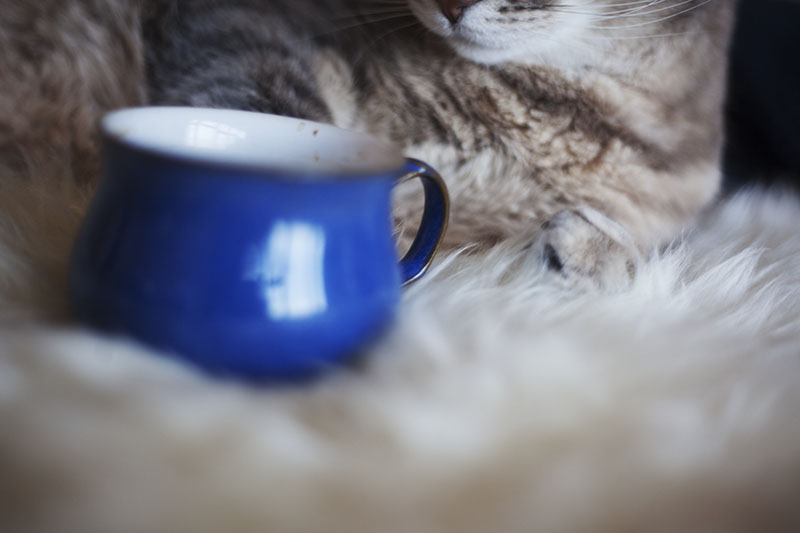 funny-cat-mugs-coffee-kitty-themed-humor