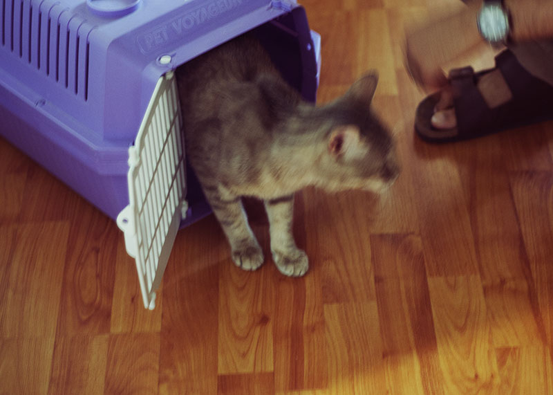 moving-to-a-new-home-with-a-cat-making-move-easy-for-kitties