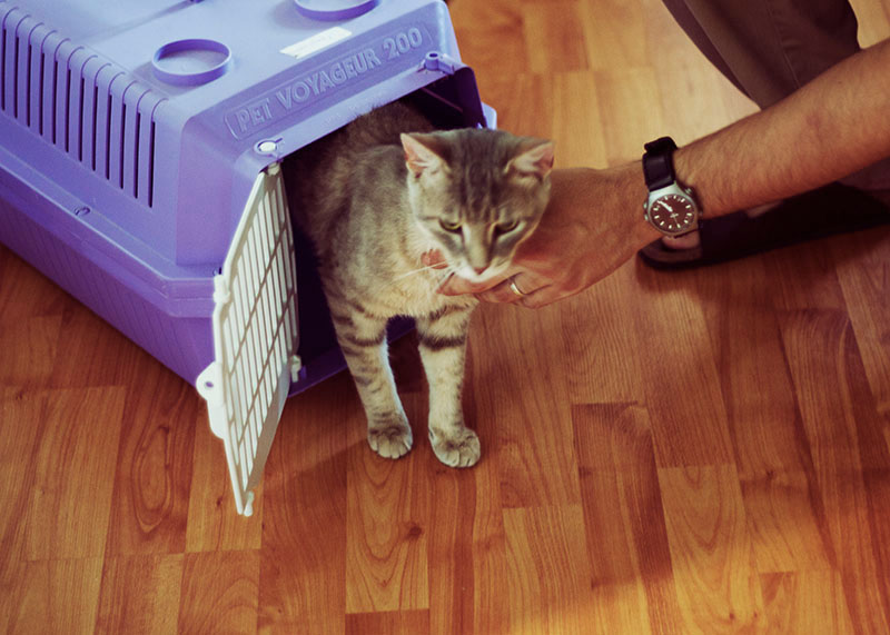 Moving With Cats? Step-By-Step, How to Make Moves Easier on Kitties