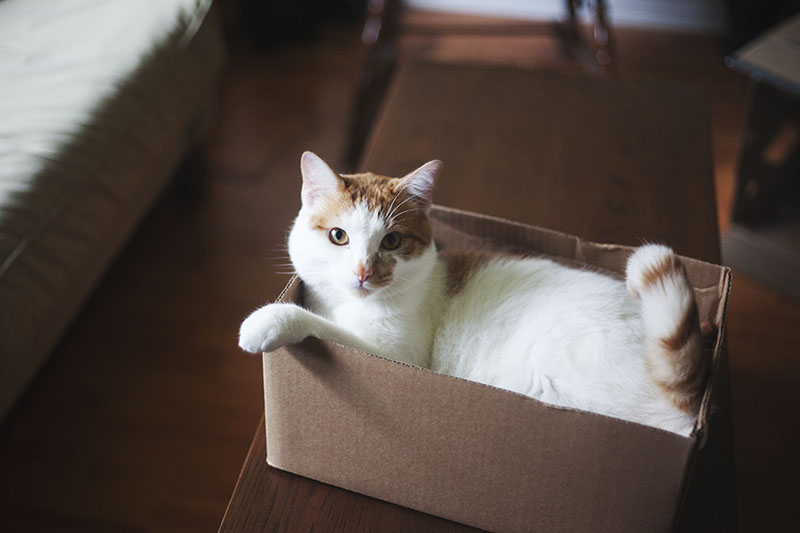 25 Secret Rules All Cats Seem to Live By