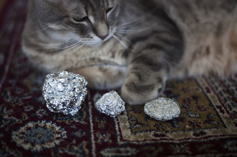 cat-sitting-with-aluminum-foil-balls-variations-kitty-diy