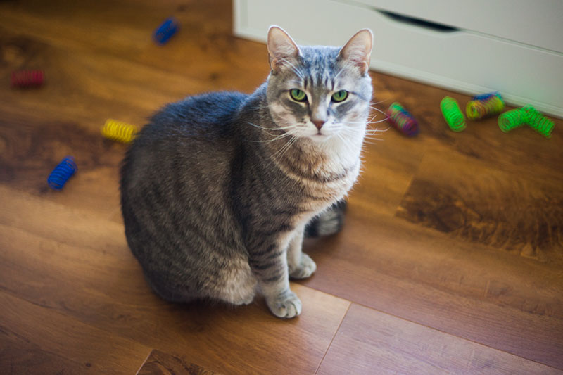 kittyclysm-cat-blog-ethical-pet-cat-toy-review-springs