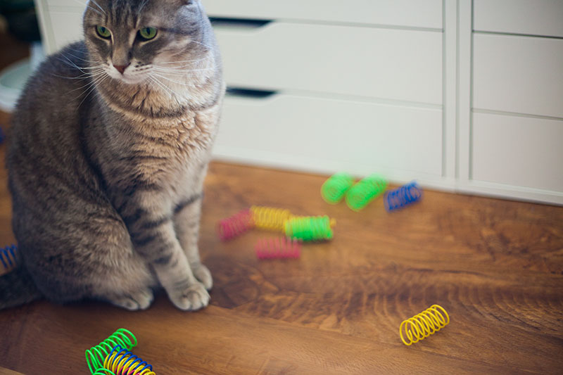 cat-springs-toy-review-kittyclysm-cat-blog-testimonial