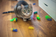 Spot Ethical Pet Colorful Plastic Springs Cat Toy Review