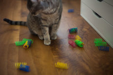 What Are Your Cats' Favourite Cat Toys?