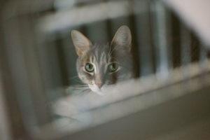 indoor-cat-prisoner-caged-animal