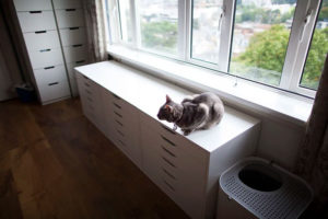 indoor-cat-small-apartment-studio-flat