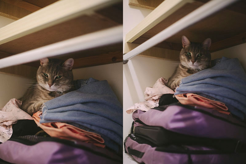 cat-sleeping-in-nook-in-closet