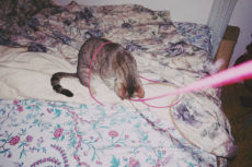 Cat Loves Playing with Yarn & String? 3 Safer Alternatives to Use Instead