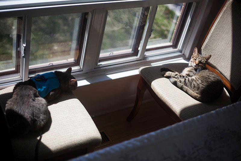 avery-and-walker-two-cats-snoozing-by-windows