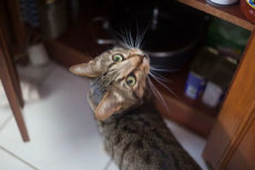 14 Frustrating Aspects of Cat Ownership: What's on Your List?